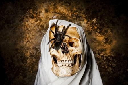 Spider on a skull photo