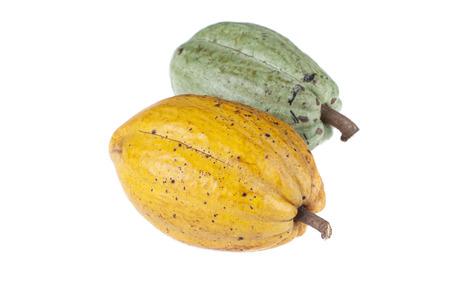 planta de frijol: Cacao