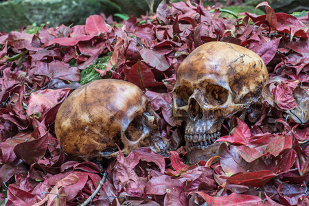 the next life: Couple death under the maple tree