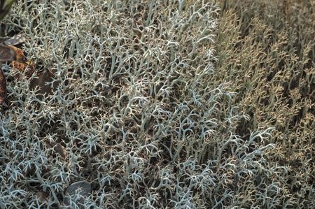 mutualism: Lichen