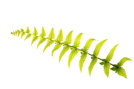 Fern leaf Stock Photo