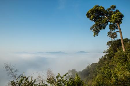 plentifully: Sea Mist