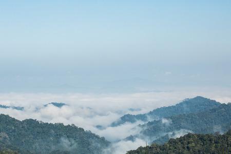 plentifully: Sea of mist