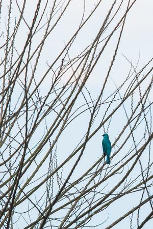twig: Bird on Twig