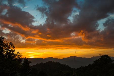 alpine zone: Sunset in Forest