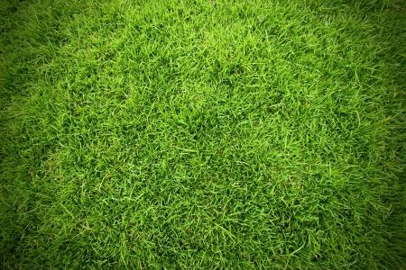 grassy field: Green field of grass background Stock Photo