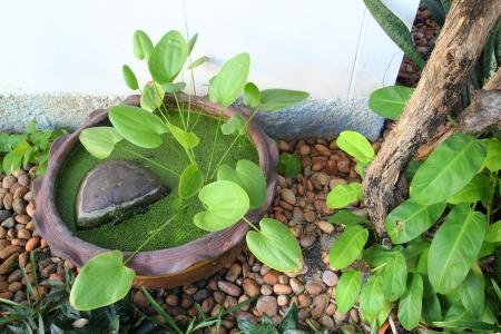 Small garden stone pond