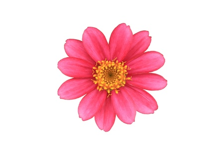 Flor rosada aislada con trazado de recorte