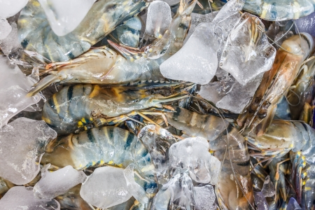 Fresh shrimps with ice in market Stock Photo