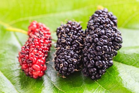 Group of mulberries with a leaves Stock Photo