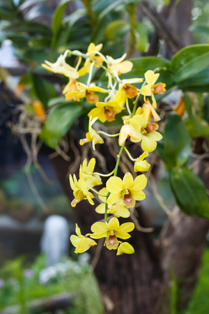 Yellow orchid flower on tree Stock Photo