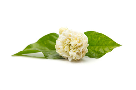 White jasmine flower.  Jasmine flowers isolated on white background