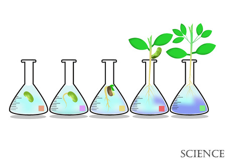 experimentation: Experimental growth of plants in Erlenmayer flask.