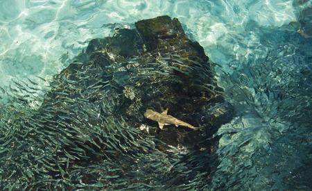 shark and many fish photo