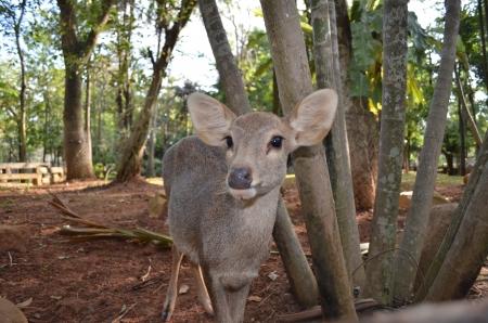 Deer in Thai zoo Stock Photo - 16155322
