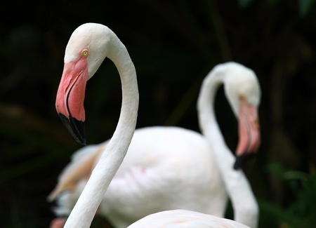 Flamingos in Zoo travel of Asia photo