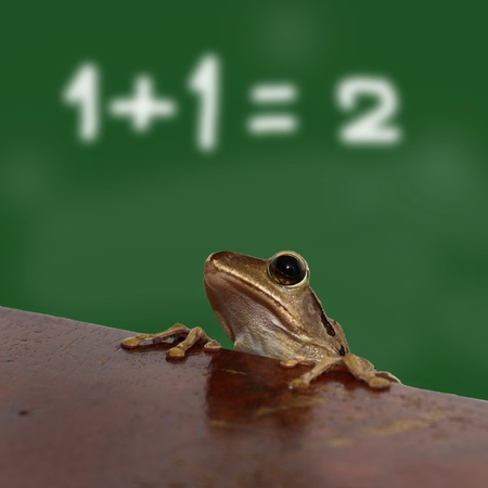 emerge: Frogs emerge into the classroom