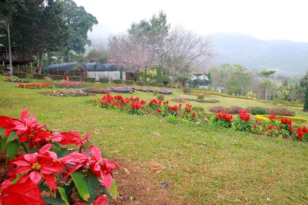 Colorful flower in garden between moutain  photo