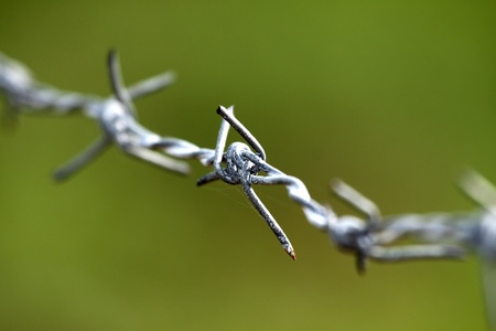 Barbed is rust with background color green photo