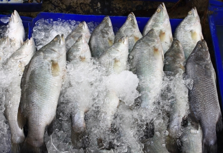 Fresh fishes on ice at market photo