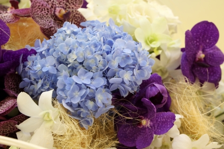 colorful hydrangea flower photo