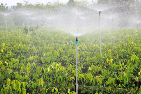 irrigation system used for seedlings of rubber trees on a plantation in Thailand  photo