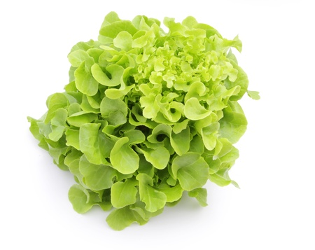 Hydroponic vegetable (Green Oak) on white background