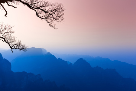 traditional plants: Morning mist mountains landscape at zhangjiajie the morning