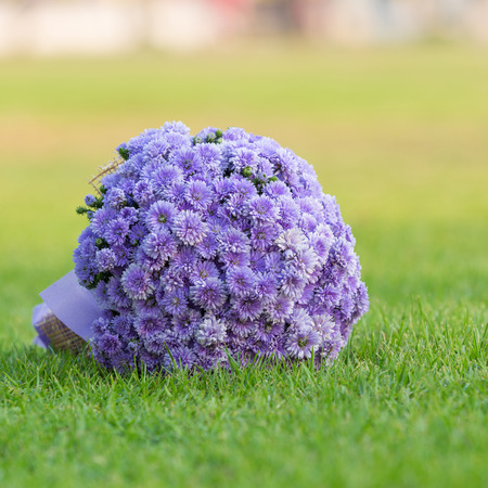 gree: bouquet of flowers chrysanthemum color purple on gree grass floor