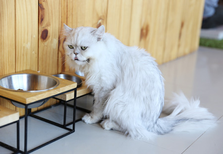 Cat sit on floor eating from a steel bowl photo