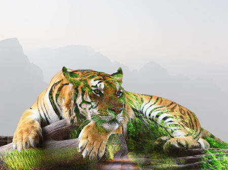 uplifting: Double exposure concept tiger bengal relationship with forest and moutain background