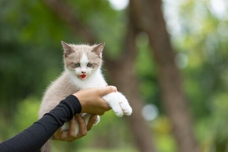 Adorable  kitten sitting on human hand  in the park.