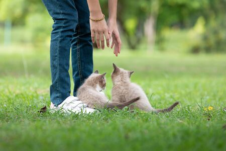 Adorable  kitten playing with human on the green grass in the park.