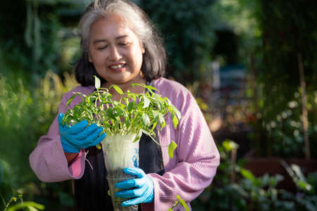 Retired senior woman smiling and holding sprout pot at the outdoor garden.