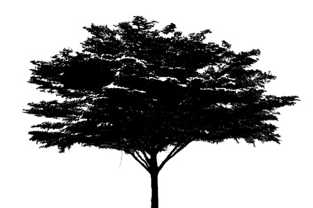 Black tree silhouette isolated on white background photo