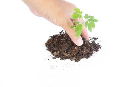 Human hands giving support to a small plant that grows on white background photo