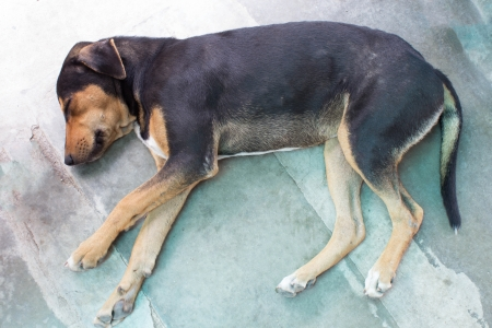 dead dog: Stray dog laying on the pavement of the street  Stock Photo