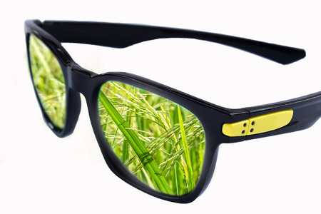 Reflection of rice in sunglasses on white background