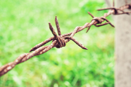 bearded wires: Barbed wire fence and green grass