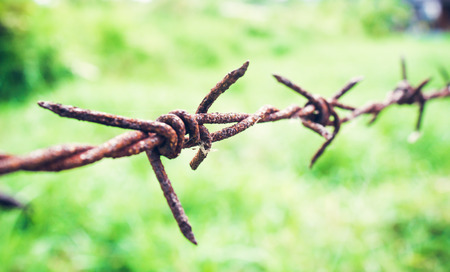 barbed hook wires: Barbed wire fence and green grass