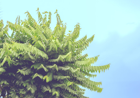 clump: the tops of a clump of trees,vintage style