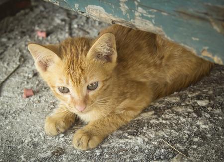 emaciated: sad little homeless kitten on the street