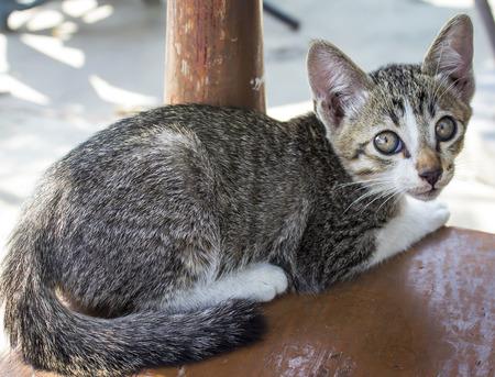 emaciated: little homeless kitten on the street