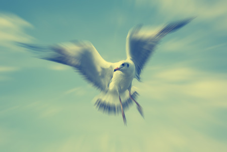 water fowl: Sea gull  on blue sky , Image zoom with retro style