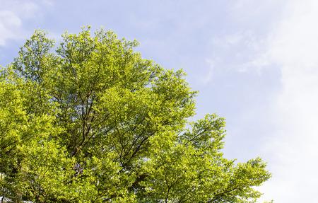 Treetop on blue sky background Stock Photo
