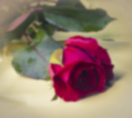 lovelorn: Concept photograph for Valentines Day , Image blur style