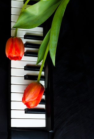 synthesizer: Two red  tulip on the keys of Synthesizer Stock Photo
