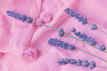 sprigs of lavender are on a pink scarf photo