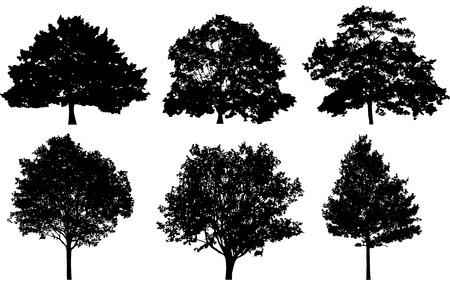 treesilhouettes 1