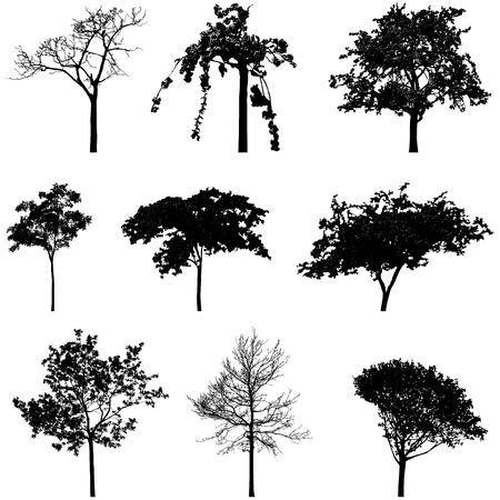 treesilhouettes 3